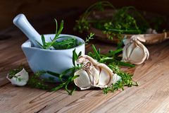 Garlic and  green spices Royalty Free Stock Images