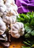 garlic Grupo do alho fresco com ervas do aipo Foto de Stock