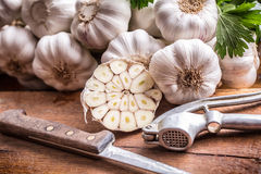 garlic Grupo do alho fresco com ervas do aipo Imagem de Stock