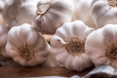 garlic Grupo do alho fresco com ervas do aipo Fotografia de Stock