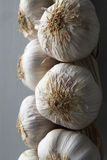 Garlic Hanging From String Royalty Free Stock Photography