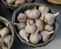 Garlic harvest Royalty Free Stock Photo