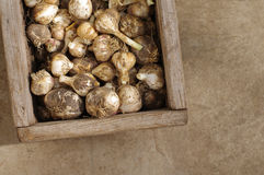 Garlic harvest in a  box. Garlic harvest in a wooden box Royalty Free Stock Image