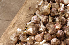 Garlic harvest in a  box. Garlic harvest in a wooden box Royalty Free Stock Photography