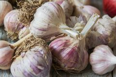 Garlic harvest on table. Of rough wooden planks closeup Royalty Free Stock Photo
