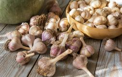 Garlic harvest. On table of rough wooden planks Stock Image
