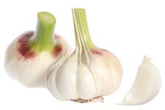 Garlic head Royalty Free Stock Photo