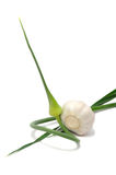 Garlic Head with Scape. A garlic head and a scape with leaves on a white background Stock Photo