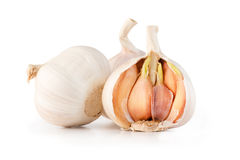 Garlic head and sprout  Stock Images