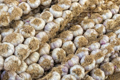 Garlic heads Stock Images
