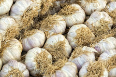 Garlic heads Royalty Free Stock Photography