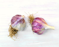 Garlic heads Royalty Free Stock Photo