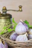 Garlic heads in wicker basket Stock Image