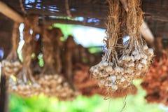 Garlic herb organic hanging on old bamboo. stock photo