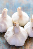 Garlic Herb. Vertical image of garlic herb Stock Photography