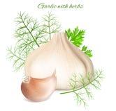 Garlic with herbs. Stock Photos