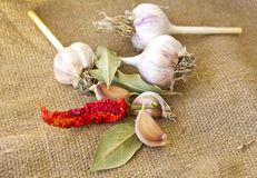Garlic, hot peppers and spices Royalty Free Stock Photography