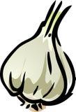 Garlic illustration Stock Photos
