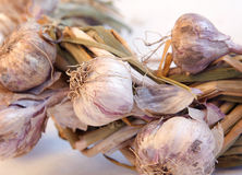 Garlic implicated Royalty Free Stock Images