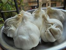 Garlic indian stock images