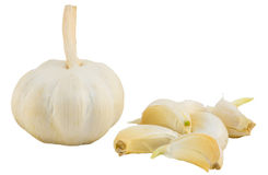 Garlic isolate Stock Image