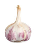 Garlic Isolated Royalty Free Stock Image