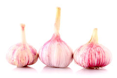 Garlic isolated Royalty Free Stock Photography