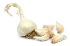Garlic isolated. Dried garlic bulb and cloves, isolated on white Royalty Free Stock Photo