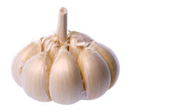 Garlic Isolated Stock Images