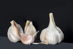 Garlic isolated. Head and clove of garlic on black background Stock Photography