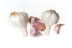 Garlic isolated on white. Garlic and four cloves isolated on white Stock Image
