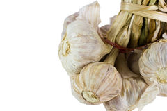 Garlic isolated Royalty Free Stock Image