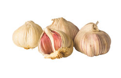 Garlic isolated Royalty Free Stock Images