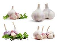 Garlic isolated. On white background Royalty Free Stock Image