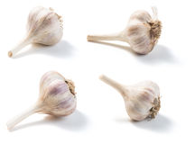 Garlic isolated on a white Stock Image