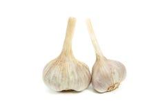 Garlic isolated. Garlic isolated on white background Stock Photos