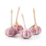 Garlic. Isolated on white background Stock Photography