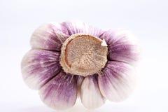 Garlic isolated on white background ,close up Stock Images