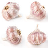 Garlic isolated on white. Collection Royalty Free Stock Photo