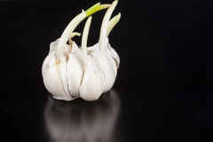 Garlic with Leaf Royalty Free Stock Image