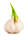 Garlic with Leaves Royalty Free Stock Images