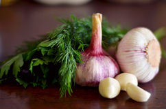 Garlic with leaves of parsley and dill. Garlic with leaves of parsley and fennel on table Stock Photos