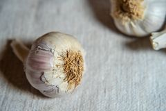 Garlic on linen fabric background. Close Up stock photos