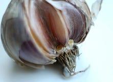 Garlic - macro removal Stock Images