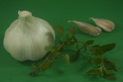 Garlic and marjoram. On a green background,focus on a garlic stock images
