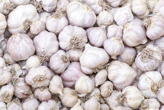 Garlic in market - Allium sativum Linn. Royalty Free Stock Images