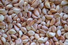 Garlic in market, the original food material Stock Photos