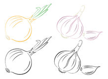 Garlic onion. The figure shows the garlic and onions Stock Images