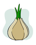 Garlic onion Stock Photography