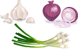 Garlic, Onion, Scallion Stock Image